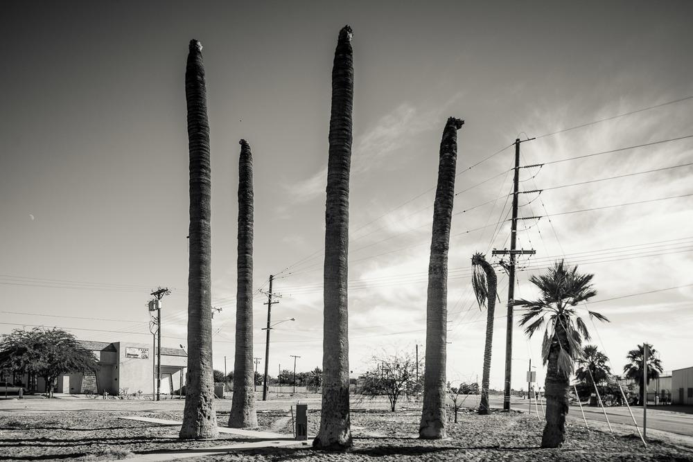 mireles_2013_desert-3822.jpg