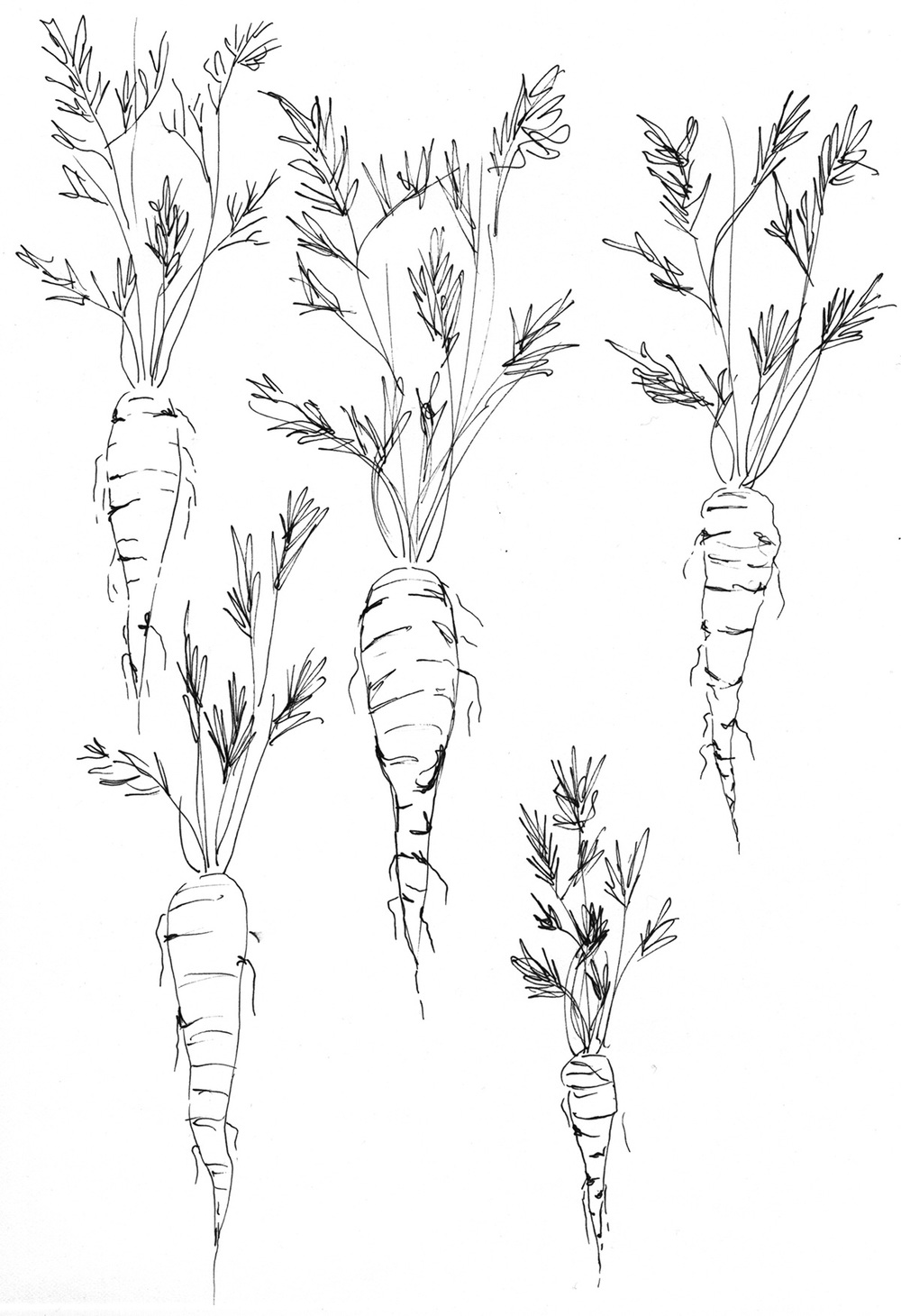 August 10: I am not exactly sure how the conversation started, but my friend and I were talking about pulling up carrots today, so I drew some.