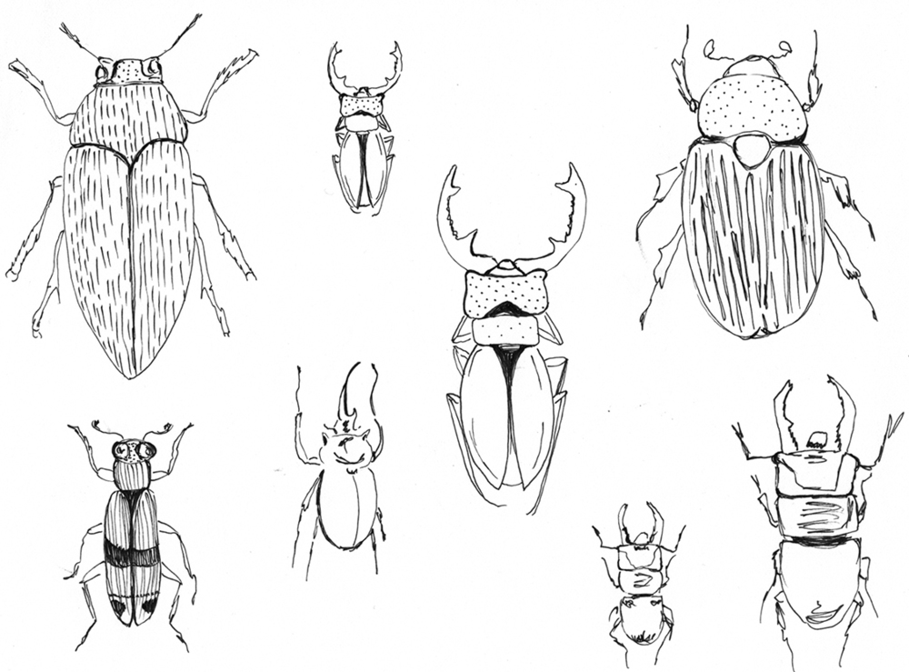 October 6:   After seeing a vintage, Egyptian-inspired, beetle necklace on an episode of Antiques Roadshow (a guilty pleasure of mine), I started thinking about beetles. I did some research and decided to draw a few.