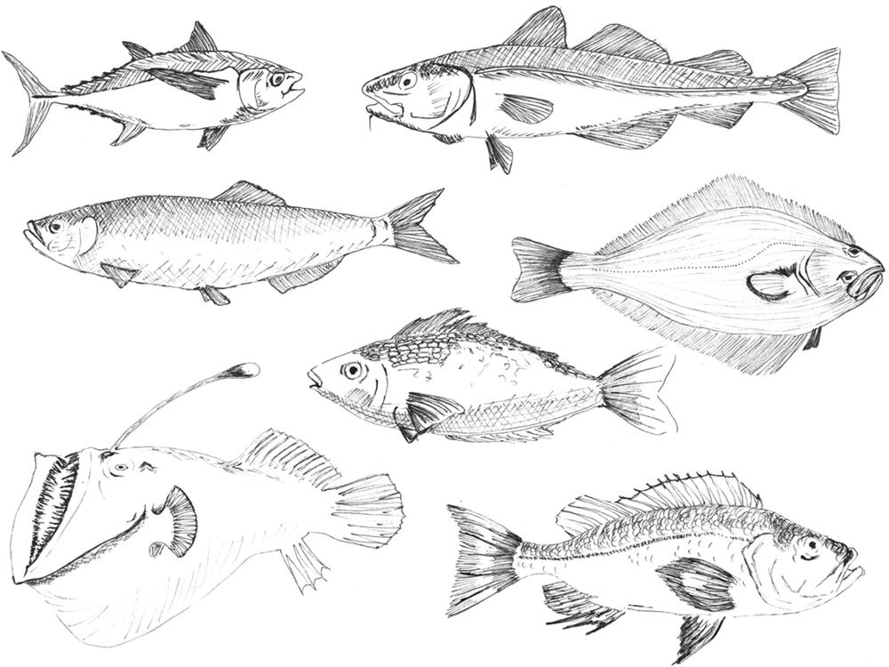 December 10:   More fish doodles! I like the deep sea angler best because it's weird looking.