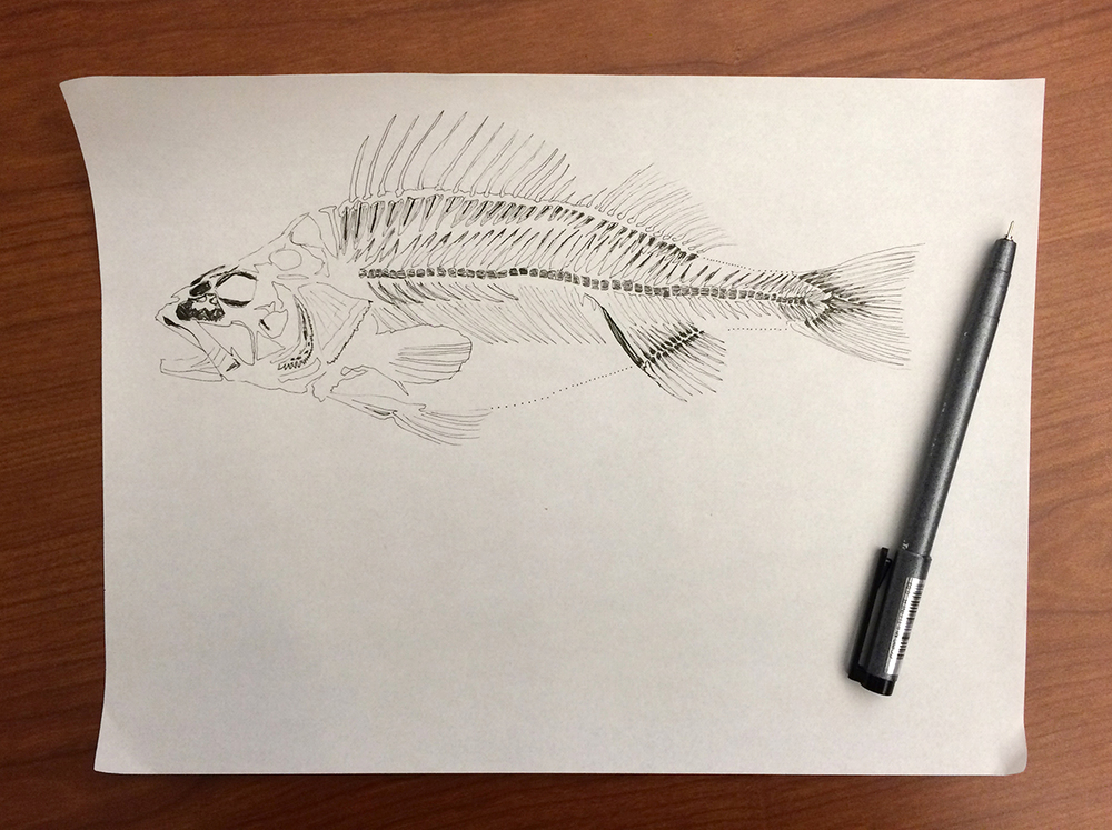 December 11:   Fish skeleton in the works.