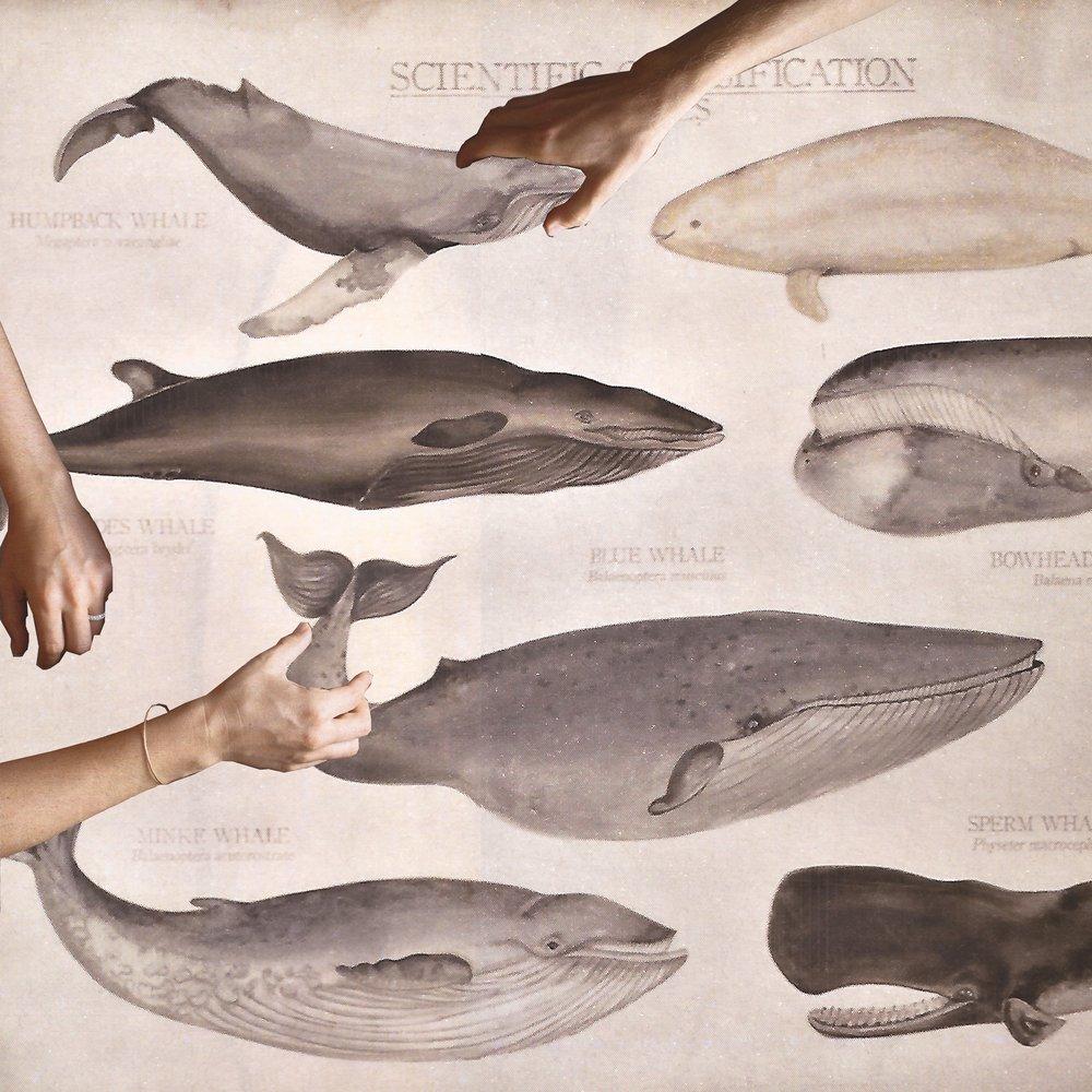 Howtocatchawhale (1).jpg