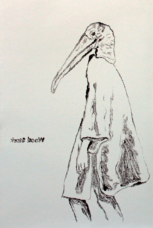 Wood Stork (Study)