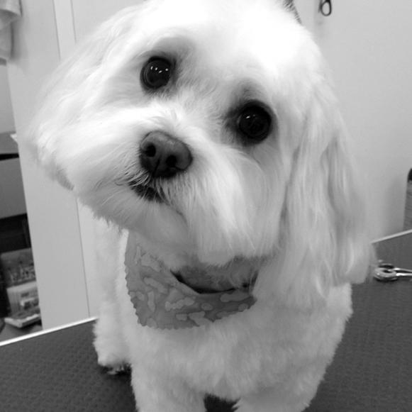 whitedog1.jpg