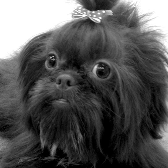 browndog1.jpg