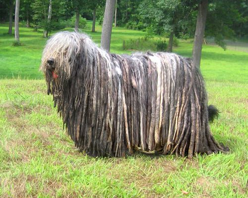 Leave the dreadlocks to these guys...