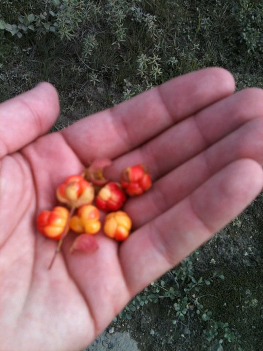 Akpiq berries