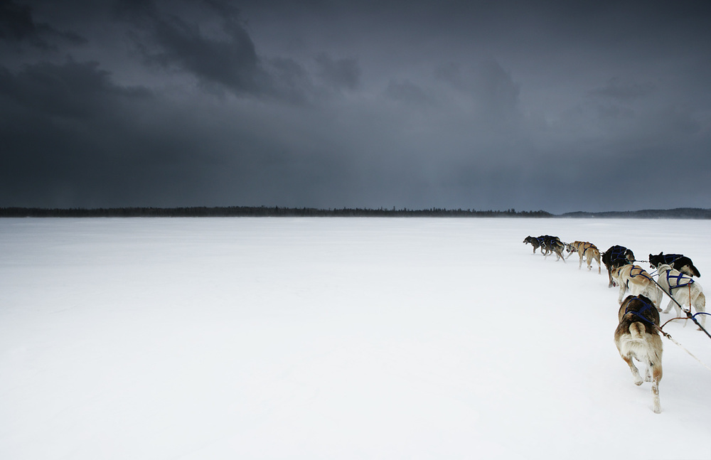 dogs35.jpg