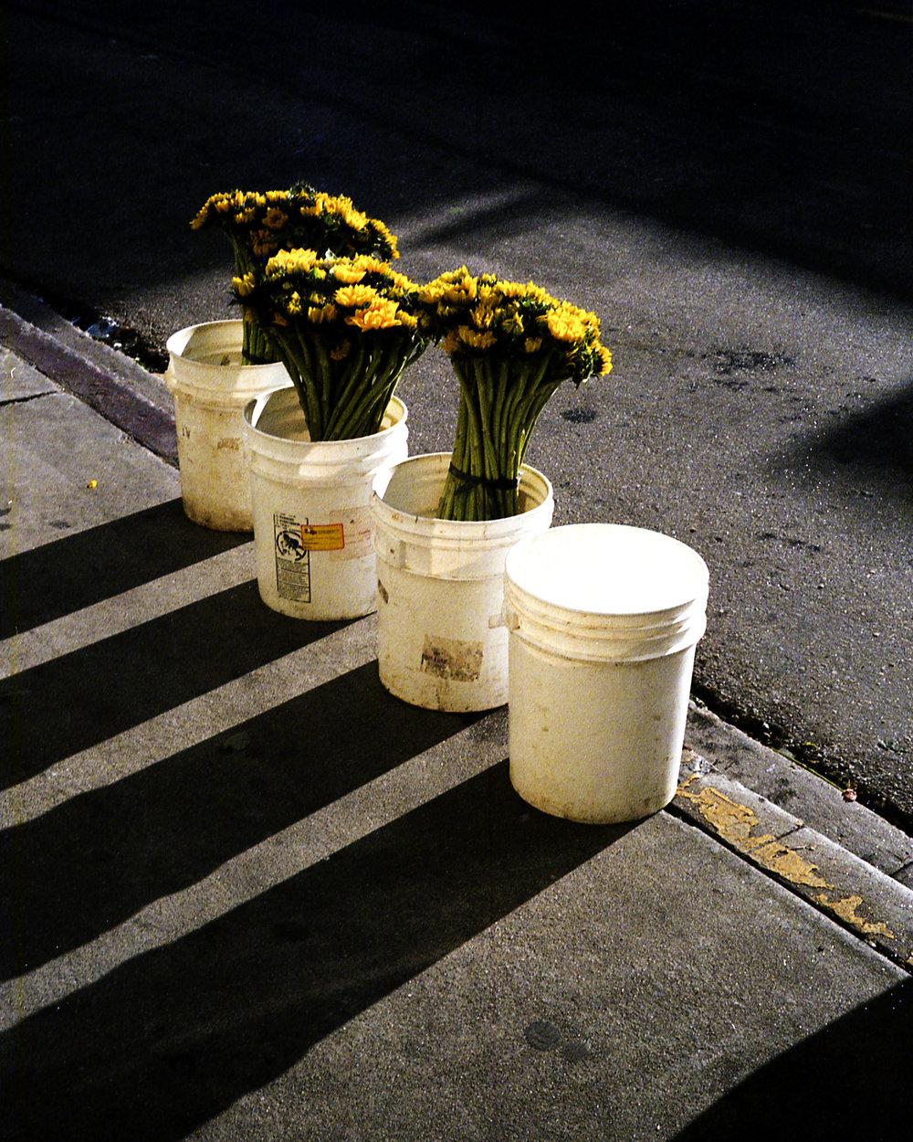 Los Angeles Flower District (2019)
