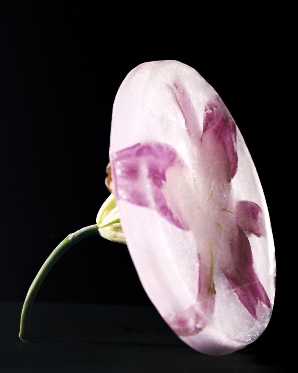 Frozen Flower (2018)