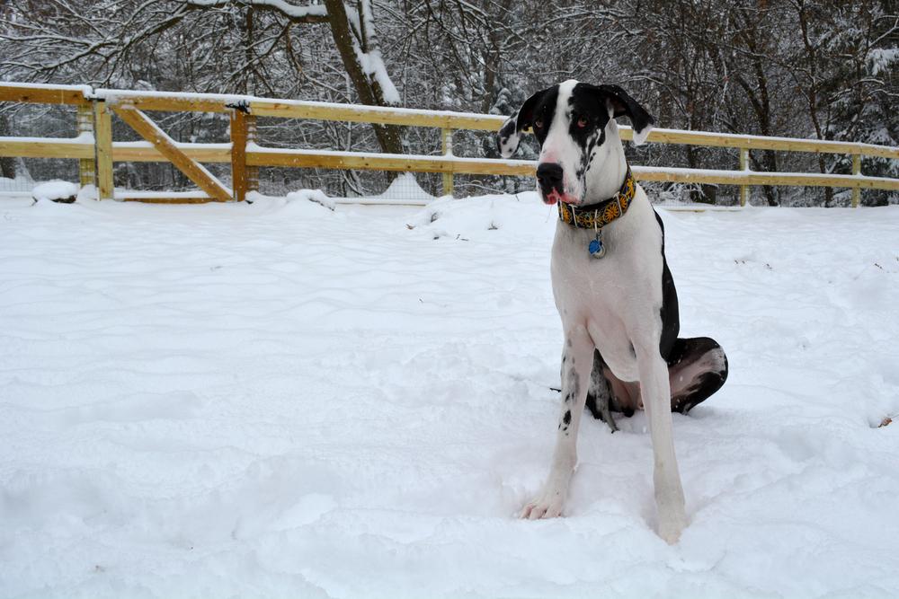 snowfrolic5.jpg