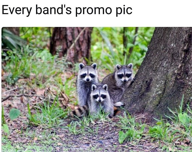 #memes #deathmetal #raccoons #trashpanda #tonyhorton