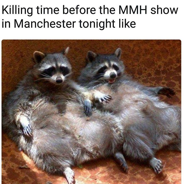#memes #melodicdeathmetal #raccoons #trashpanda #tonyhorton #didyoueverhearthetragedyofdarthplagueisthewise