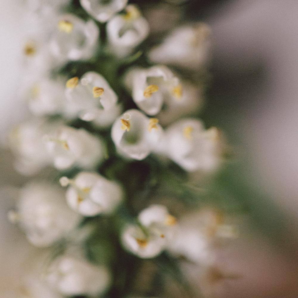 DanijelaWeddings-flowers003.jpg