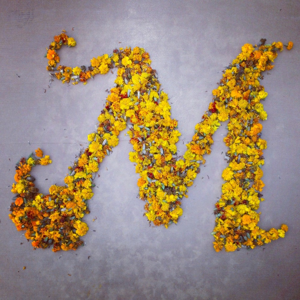 M is for Marigolds
