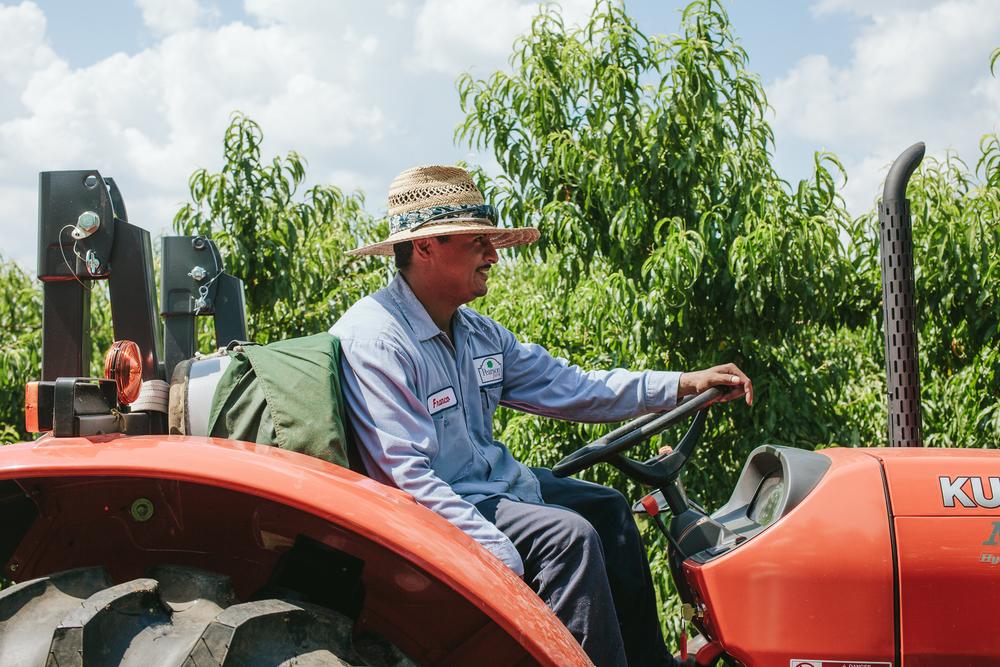 Pearson farm emily blincoe for Lincoln motor company lincoln maine