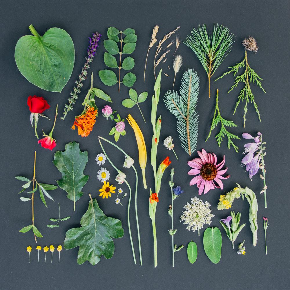 bits of nature gathered from brandi & jonathan's property.