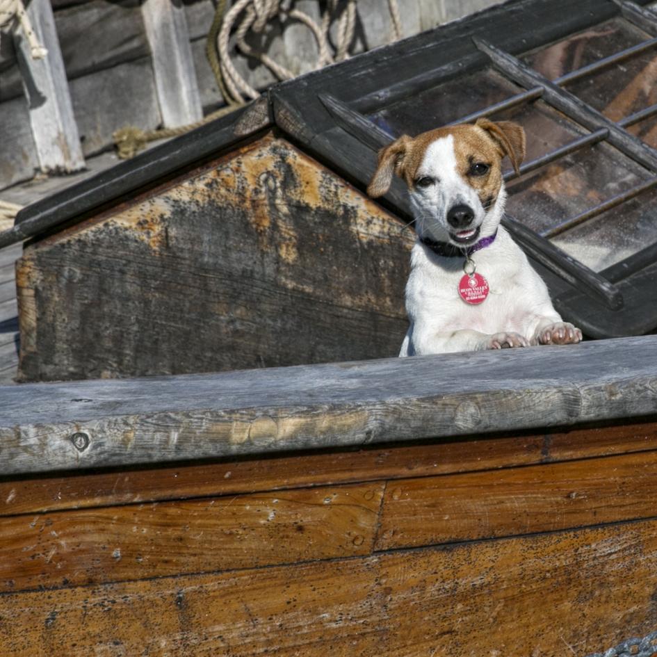 Penny Riddoch Photography Wooden Boat Festival 12 Boat dog.jpg