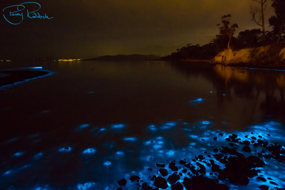 BioluminescenceTasmania Penny Riddoch (4 of 4).jpg