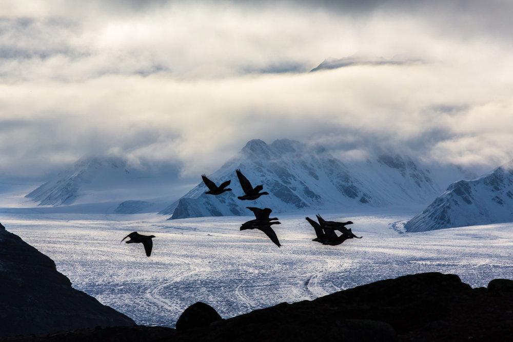 Arctic 021.jpg
