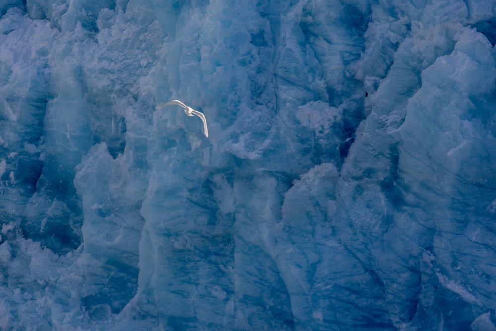 Arctic 023.jpg
