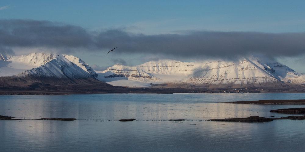 Arctic 030.jpg