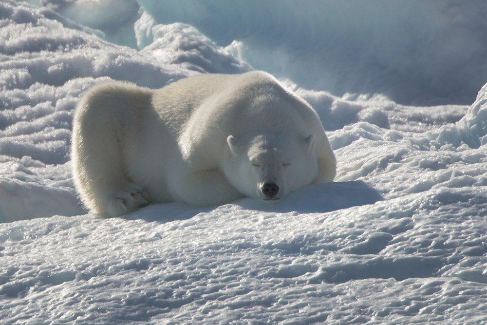 Arctic 018.jpg
