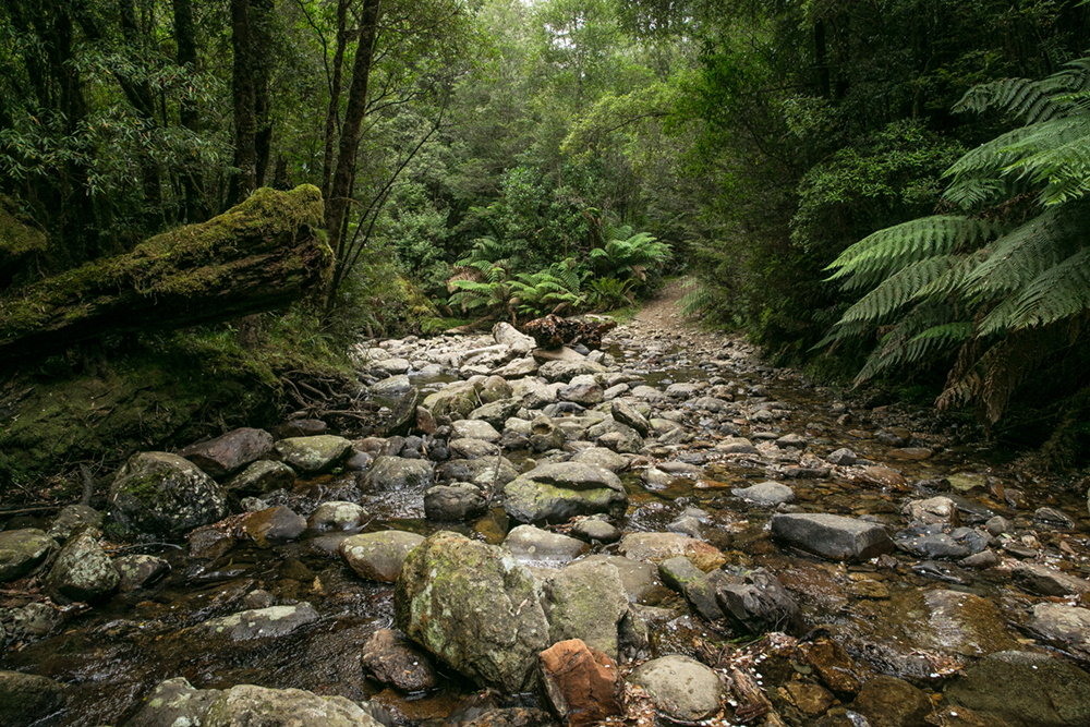 B Tarkine Tasmania Penny Riddoch.jpg