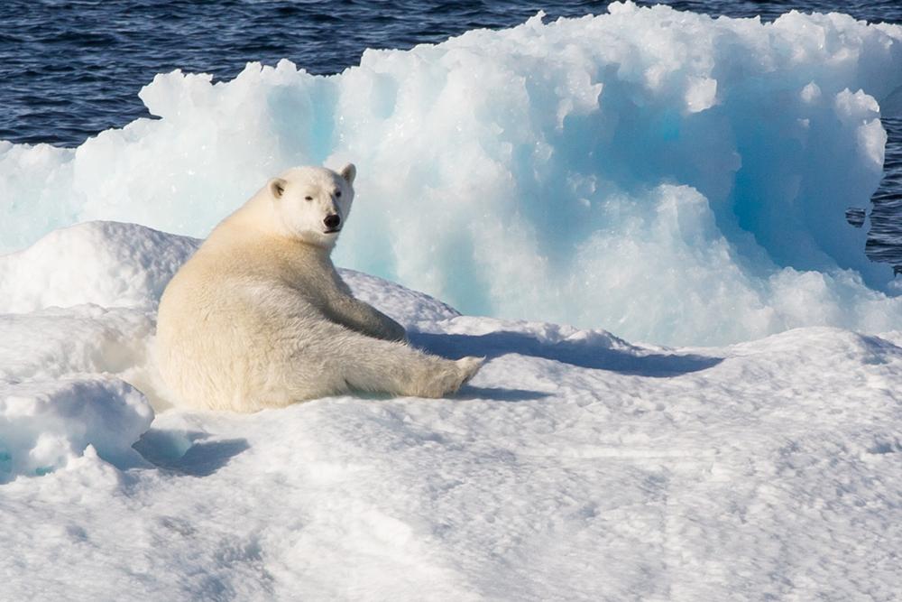E Polar stretch, Arctic Penny Riddoch.jpg