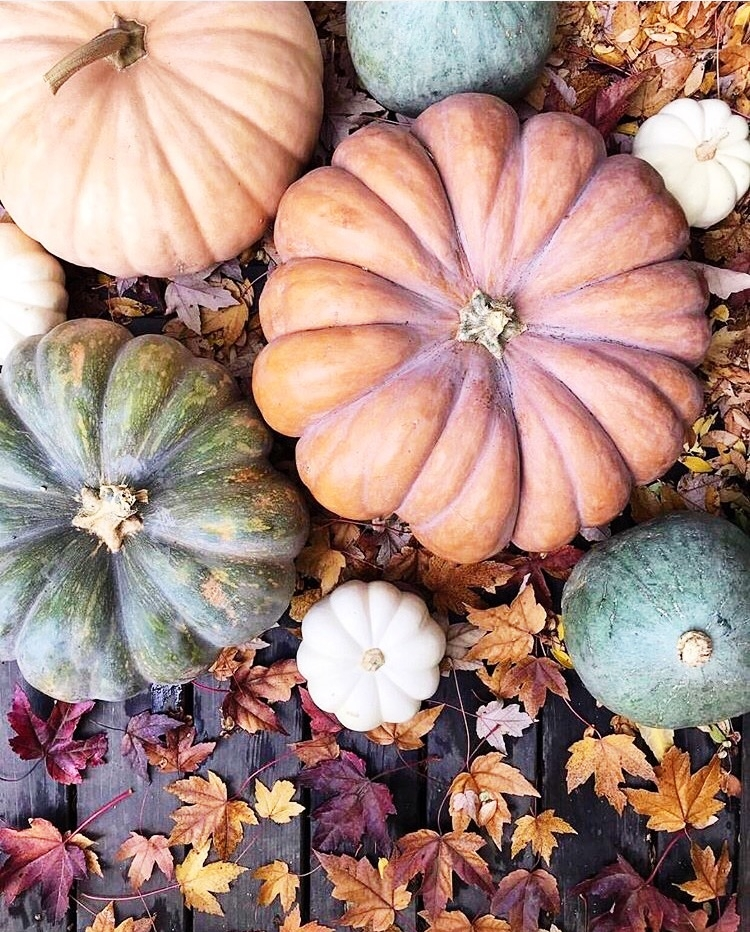 Pumpkin season... a season for gratitude and giving back. www.ChefShayna.com