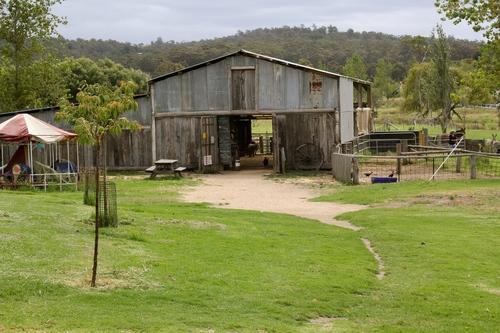 Animal Barn And Trail Rides