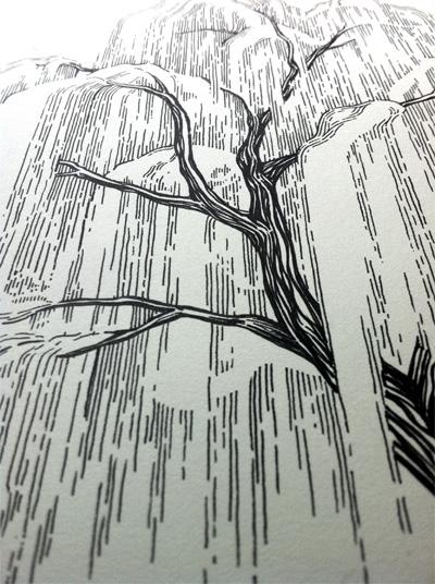 willow2.jpg