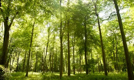 forest-trees-008.jpg