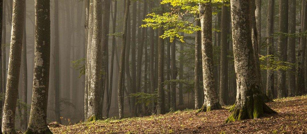Black-Forest-3_0.jpg