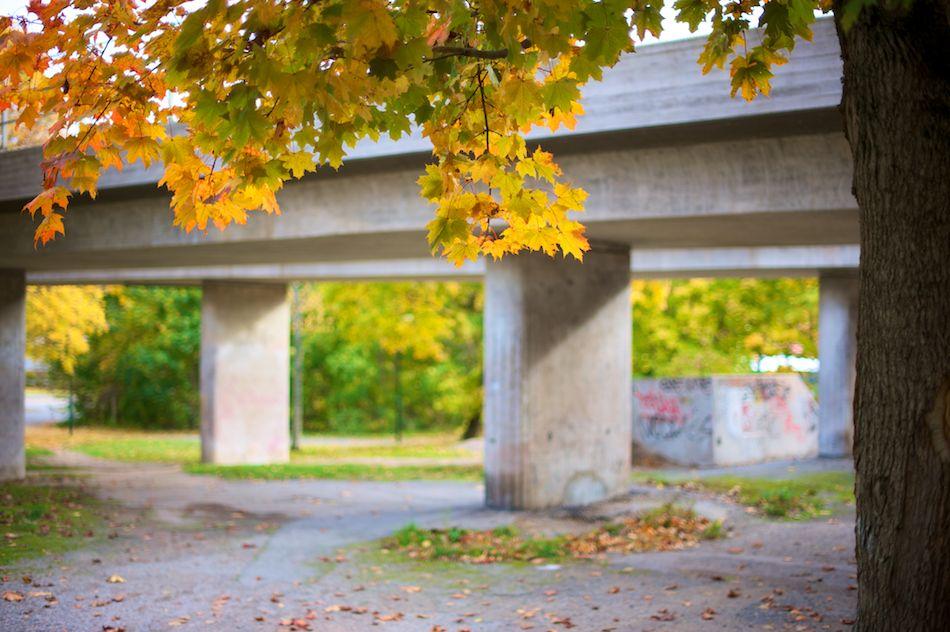 2010-10-10_D700_Nature_Fall__DSC2950