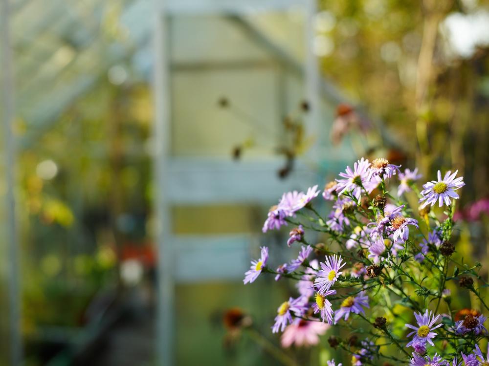 Blommor utanför växthuset