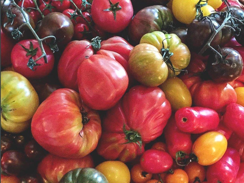 Tomato Image WEB.jpg