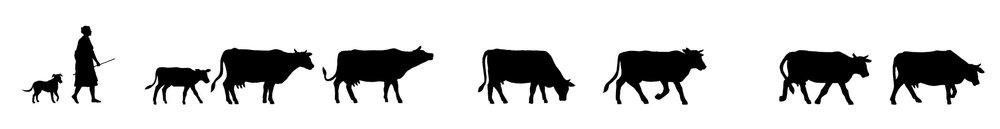 Cows_Line HI.jpg
