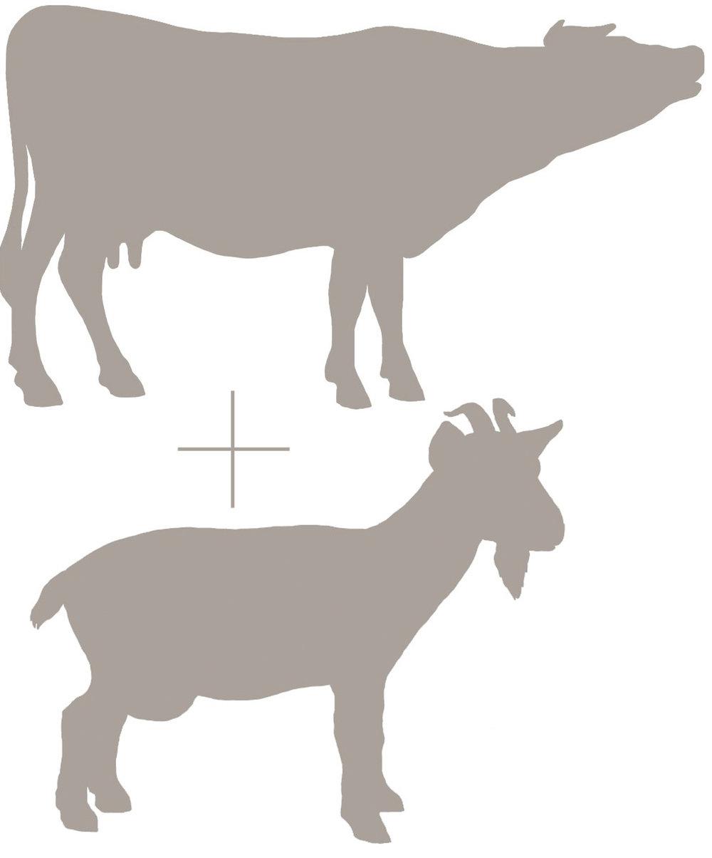 cow and goat emblem.JPG