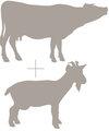 cow+and+goat+emblem (1).jpg