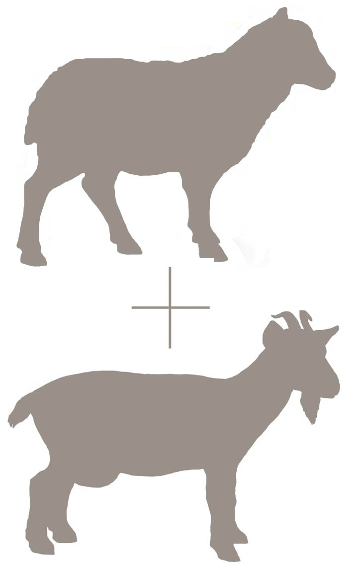 goat and sheep emblem.JPG