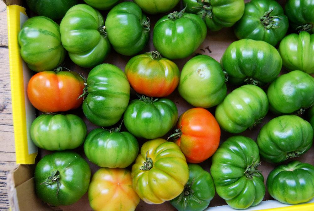 tomatoes - marinda web.jpg