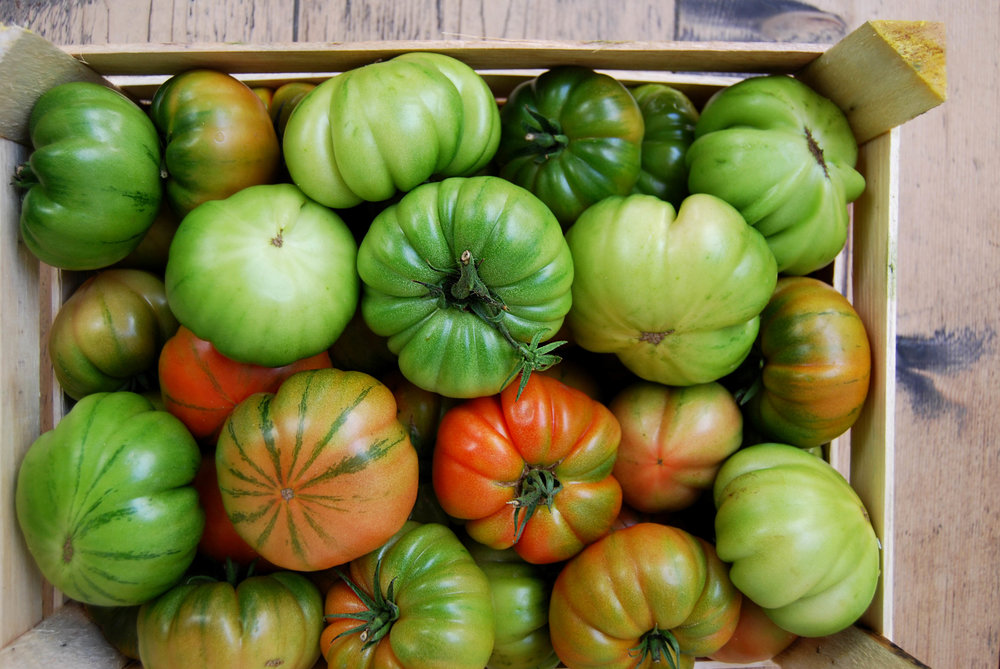 tomatoes - green costuluto web.jpg
