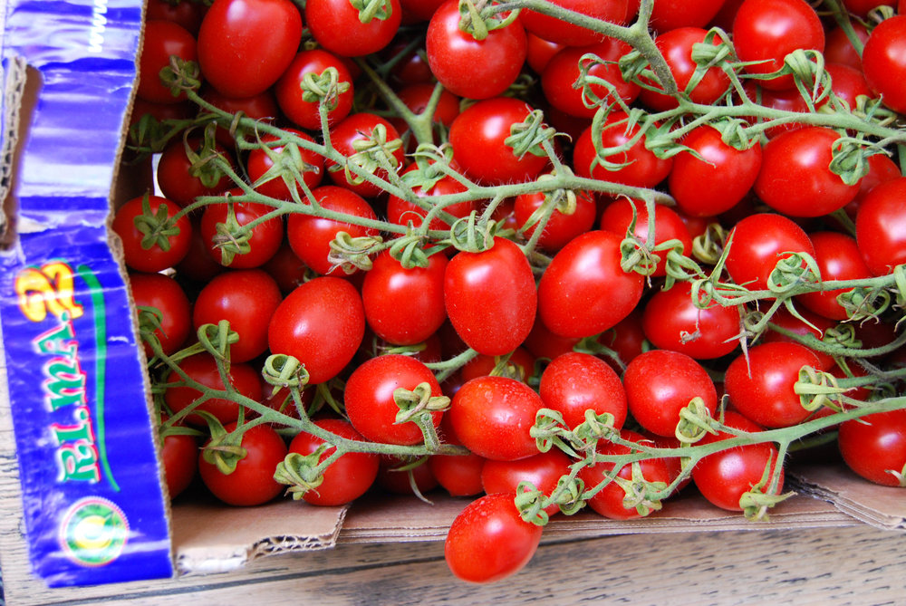 tomatoes - piccadilly web.jpg