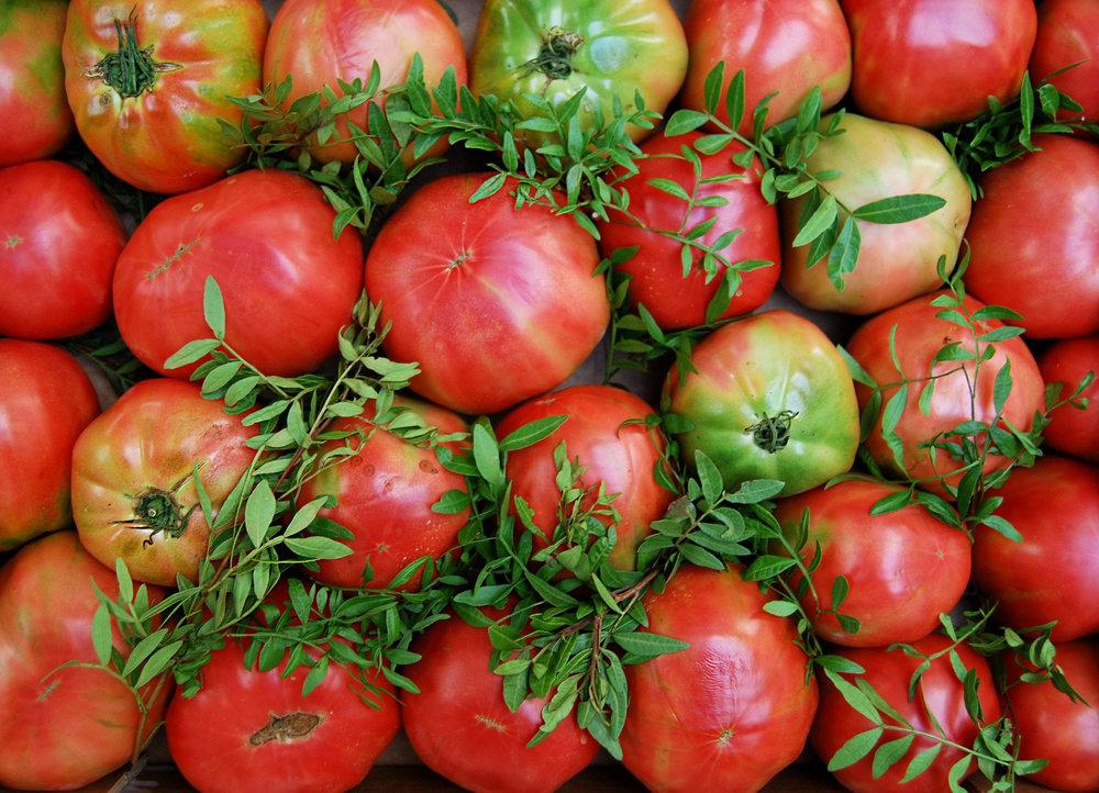 tomatoes - cuore di bue web.jpg