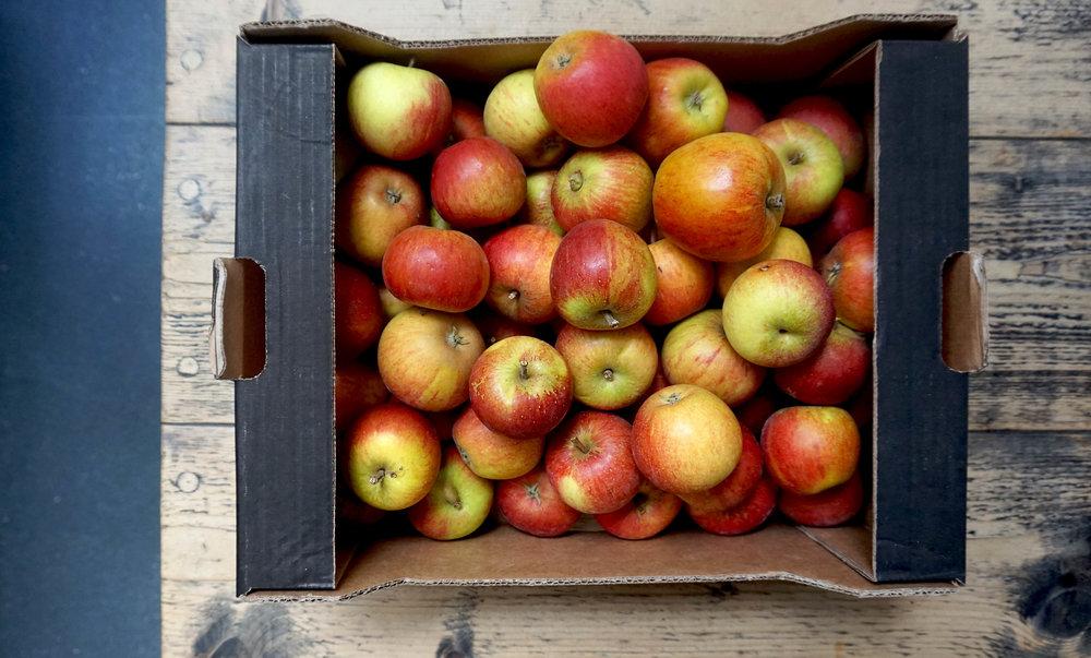 apples brogdale coxs orange pippin web.jpg