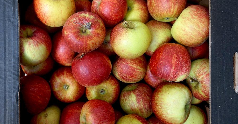 apples brogdale red charles ross web.jpg