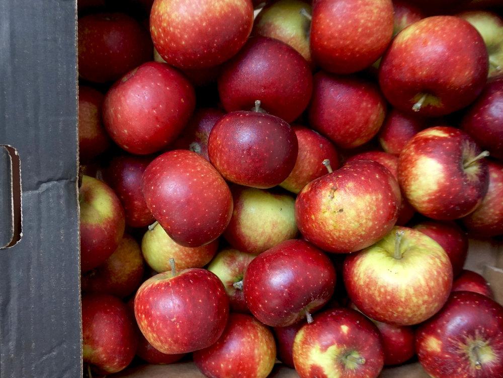 apples brogdale ingrid marie web.jpg