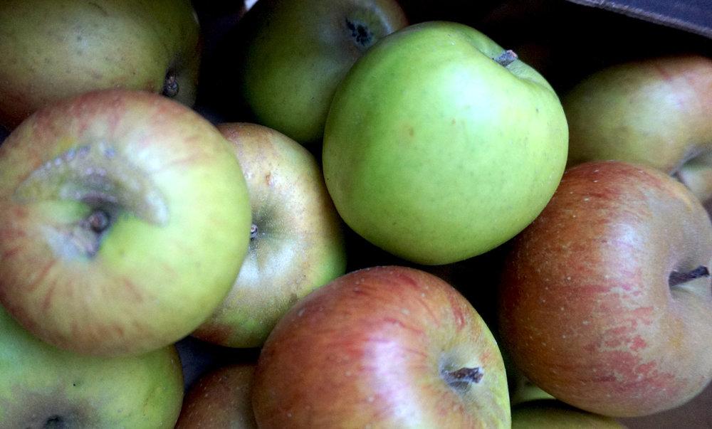 apples brogdale blenheim orange web.jpg