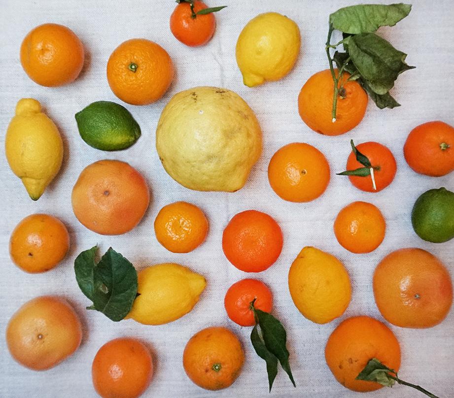 citrus whole web.jpg